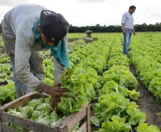 Ciren entregó completa radiografía de los productores hortícolas de la región