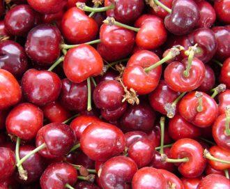 Catastro Frutícola | Descarga de Capas