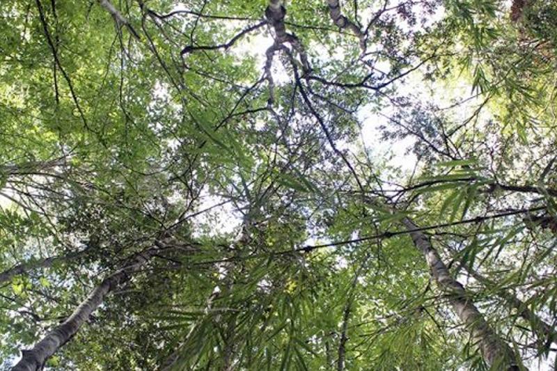 Bosque de Panguipulli sirve como sala de clases para sensibilizar a los jóvenes