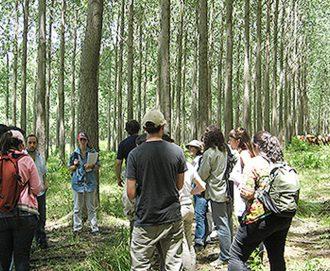 Definen innovador plan de manejo de bosque nativo