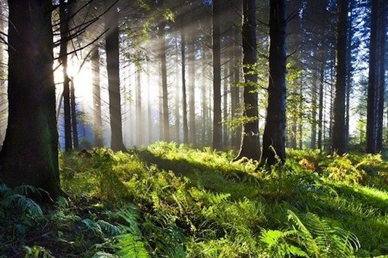 Trabajo piloto permitirá implementar inventario nacional de biodiversidad