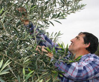 Productores agrícolas de la IV Región comienzan a ser encuestados